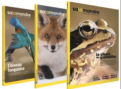 Salamandre magazine