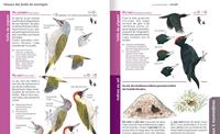 Le Guide Nature En Forêt - Salamandre