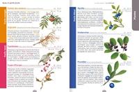 Le Guide Nature à la campagne - Salamandre