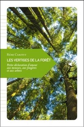 Les Vertiges de la forêt Petite déclaration d'amour aux mousses, aux fougères et aux arbres